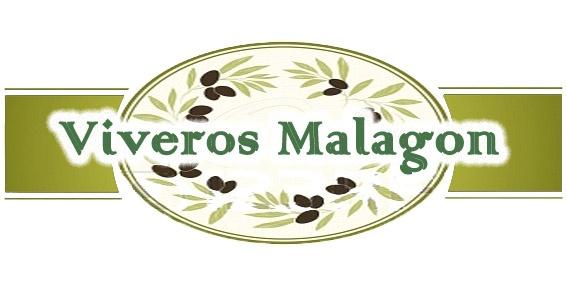 VIVERO DE OLIVOS MALAGON